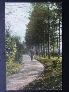 Hertfordshire LUTON Wardown SUNSHINE & SHADOW c1906 Postcard by W'm H. Cox