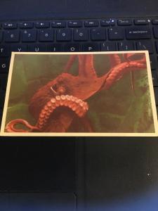 Vintage Postcard - Octopus or Devil Fish