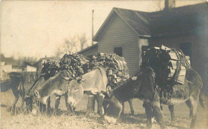 C-1910 Donkey's Firewood Load Work Animals RPPC real photo postcard 5748