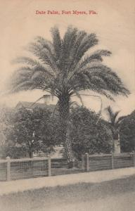 FORT MYERS , Florida , 00-10s ; Date Palm