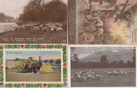 Where The Shepherd Tends His Flock Farming 4x Vintage Real Photo Postcard s