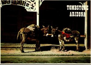 Arizona Tombstone The Faithful Burrow 1980
