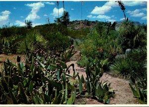 New Mexico Columbus Pancho Villa State Park Cactus