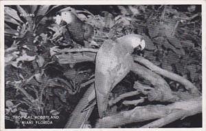Florida Miami Macaws At Tropical Hobbyland