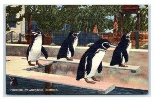 Postcard Penguins at Aquarium, Bermuda 1941 T9