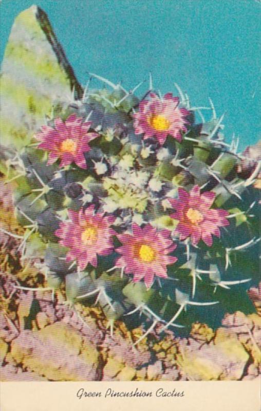 Greek Pincushion Cactus Blossom