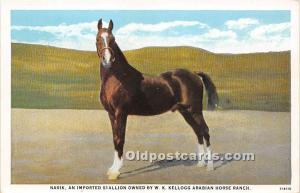 Nasik, Imported Stallion owned by W K Kellogg Arabian Horse Ranch Pomona, Cal...