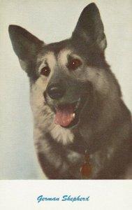 German Shepherd, 1940-60s