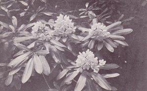 PU-1912; Flowers
