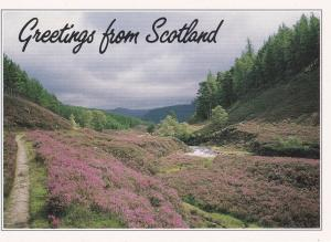 Post Card Scotland Greetings from Scotland