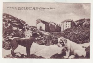 P961 old card suisse et chiens un salut du grand saint bernard, dogs