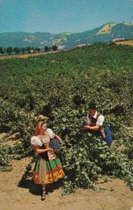 California Asti Italian Swiss Colony Vineyard Scene At Asti Sonoma County