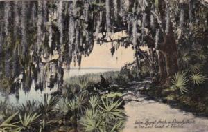 Oak Tree & Spanish Moss The Royal Arch A Beauty Spot On The East Coast Of Flo...