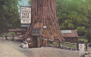 World Famous Tree House Near Lane's Redwood Flat On Redwood Highway Californi...