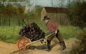 Exaggeration - A Wheelbarrow Load of Giant Grapes.