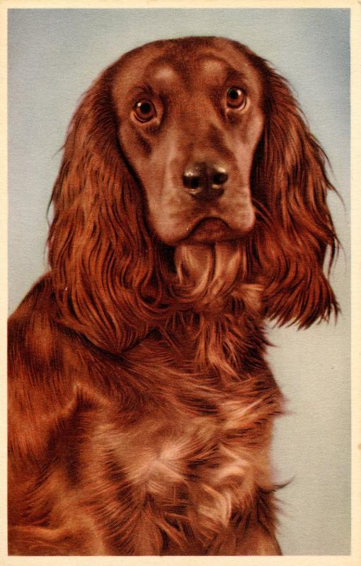 Dog - Cocker Spaniel