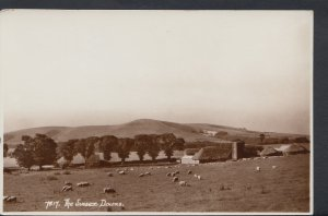 Sussex Postcard - View of The Sussex Downs - Sheep Grazing  DC788