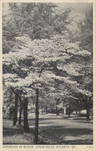 ATLANTA, Georgia, 1910-30s; Druid Hills , Dogwood in Bloom
