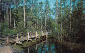 Okefenokee Swamp Park Waycross Georgia