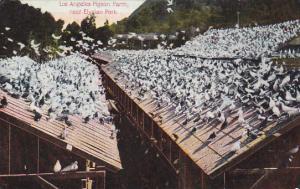 California Los Angeles Pigeon Farm Near Elysian Park