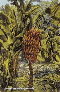 Banana Tree and Fruit Bermuda Island Unused