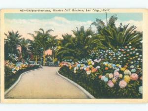 W-Border CHRYSANTHEMUM FLOWERS AT MISSION CLIFF GARDENS San Diego CA E8388