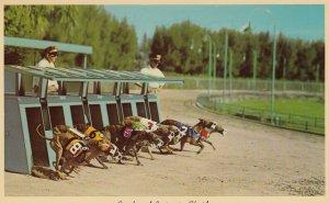FLORIDA, 50-60s, Greyhound Racing