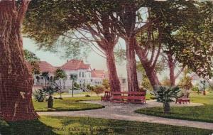 California San Francisco California Homes Among The Trees