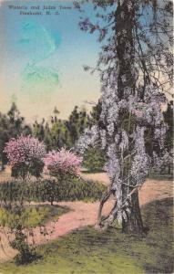 Pinehurst North Carolina~Wisteria & Judas Trees Blossoming~Handcolored Albertype