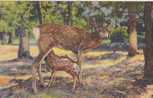 Arizona Grand Canyon Deer and Fawn Curteich