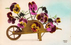 Flowers in Cart Fleurs Blumen Rex 1578
