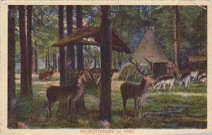 Wildfutterung im HARZ , Germany, 00-10s