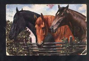 040880 Heads of Three HORSES vintage color PC