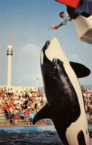KILLER WHALE LEAP Marineland of the Pacific Whale Show c1960s Vintage Postcard