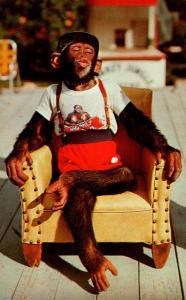 Florida Miami Chimpanzee Waiting For A Kiss At Monkey Jungle 1976
