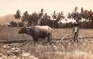 Malay Vietnam, Viet Nam Ploughing for Rice Cultivatium Malay Ploughing for Ri...