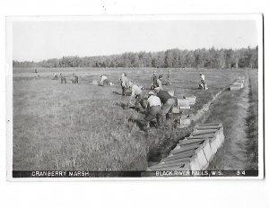 RPPC Men Picking Cranberry Marsh Bog Black River Falls Wisconsin