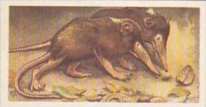 Brooke Bond Vintage Trade Card Wildlife In Danger 1963 No 4 Hispanolian Solen...