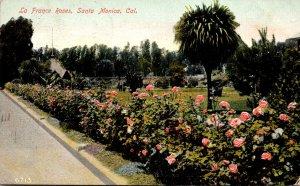 California Santa Monica La France Roses 1909