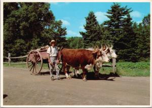 Oxcart Kings Landing Historical Settlement NB New Brunswick Postcard D43