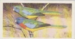 Brooke Bond Tea Vintage Trade Card Wildlife In Danger No 39 Splendid Parrakeet