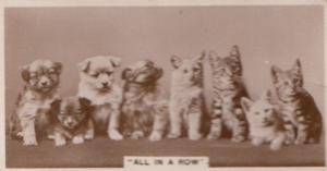 Cat Cats & Dogs In Row Identity Parade German RPC Cigarette Card