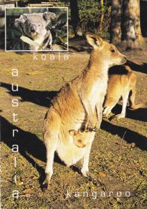 AUSTRALIA; Kangaroo with Joey & Koala, Two most popular and cuddly animals, P...