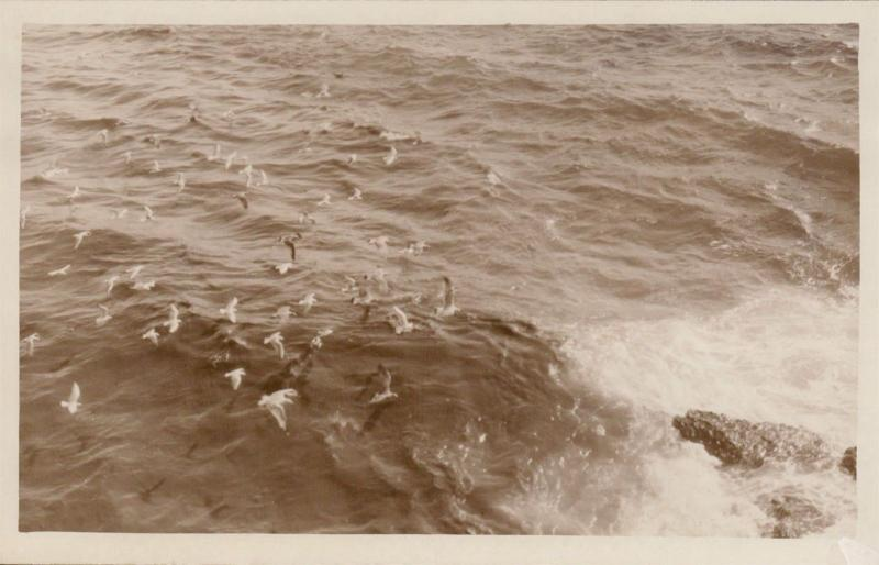 seagull real photograph unknown location UK