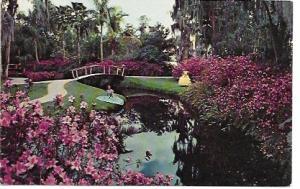 US Unused. Cypress Gardens, Florida - Floral Array