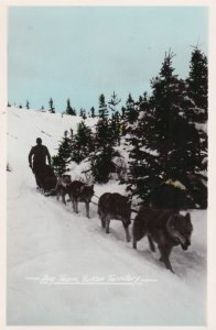 RP, Dog Team, Yukon Territory, Canada, 1920-1940s #2