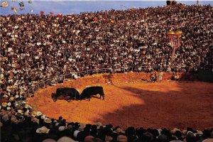Japan   Two Bulls  Fighting in arena