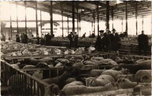 CPA PARIS 19e - Le Marché de la Villette. Le hall aux moutons (301899)