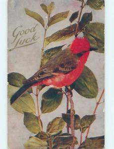 Divided-Back BEAUTIFUL LARGE RED AND BROWN BIRD ON BRANCH o9791
