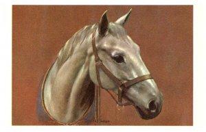 Horse ,  Horse head